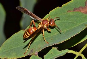 Datos curiosos sobre las avispas