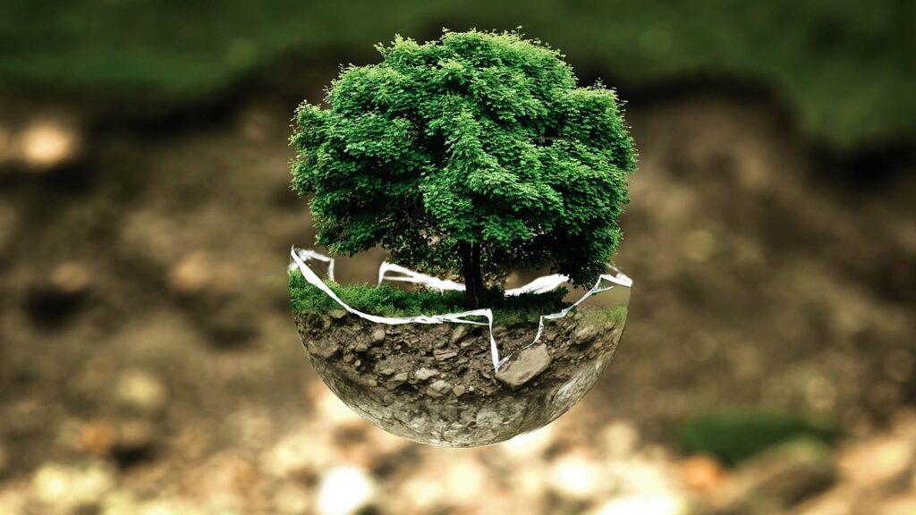 Cuidados del Medio Ambiente